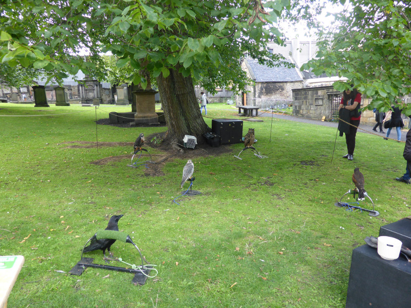 Birds of prey in Greyfriars Kirkyard